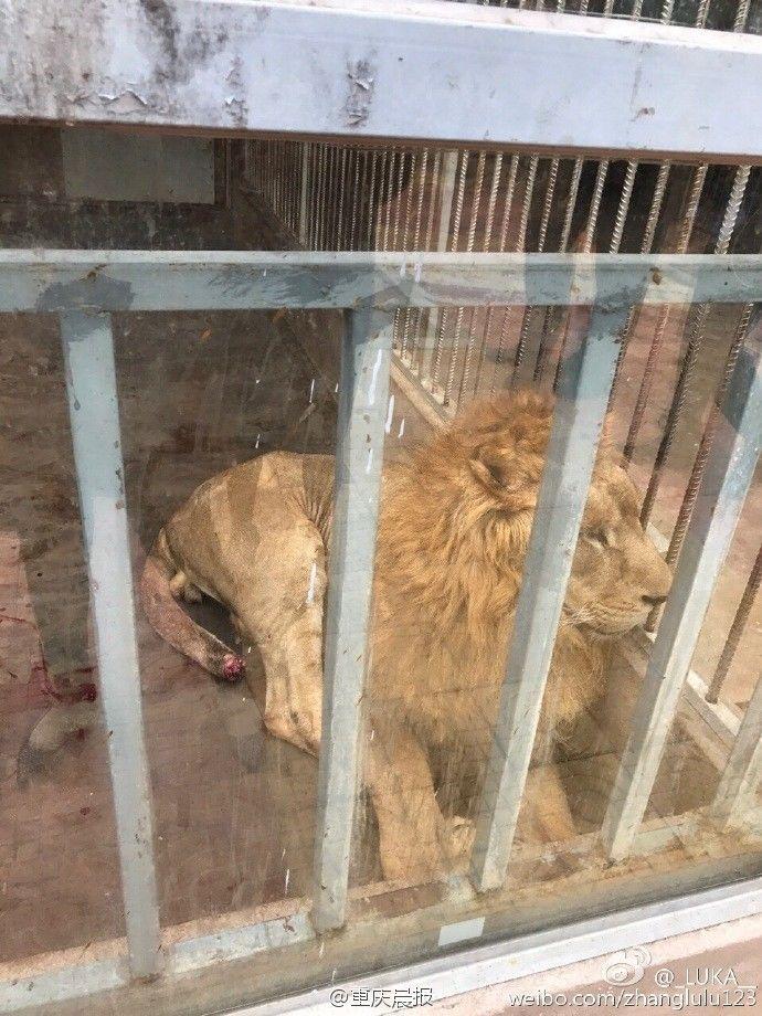 网曝福建漳州某野生动物园内