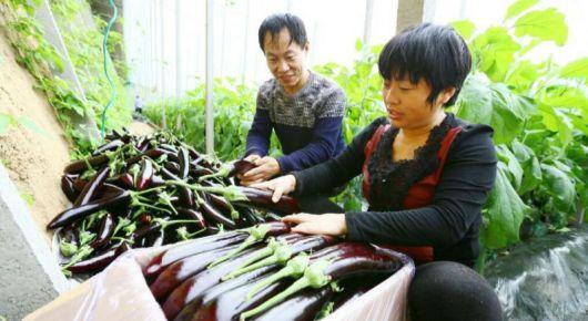 1月份蔬菜价格指数环比增长21.6%