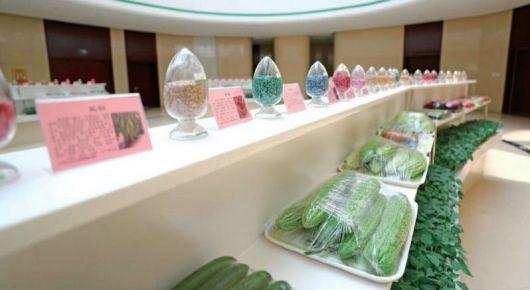 我市拥有自主知识产权的蔬菜新品种达到50个