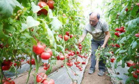 气温升高供应充足 蔬菜交易量同比增长2.6%