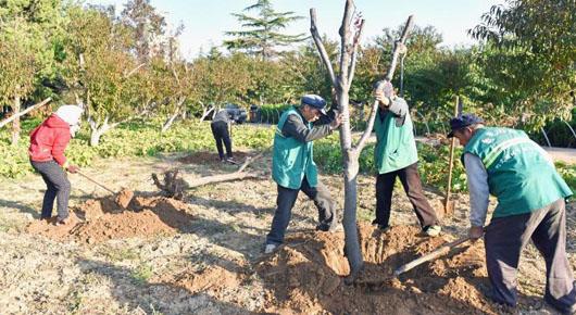 加强绿化苗木补植 提升城市绿化水平