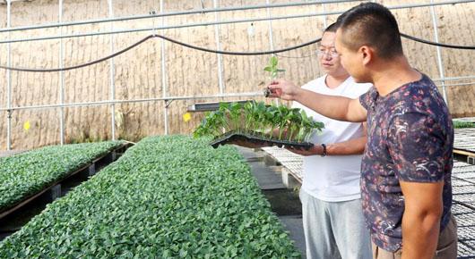构建种苗育繁推全产业链体系