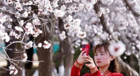 阳春三月 共赏花开
