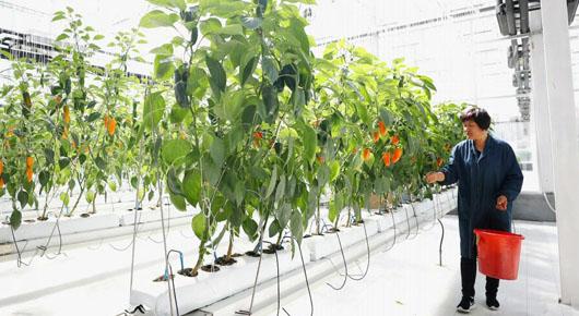 今年蔬菜整体价格高于去年同期