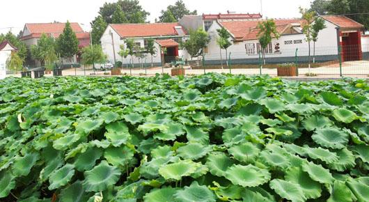 强化资金投入 提升农村人居环境