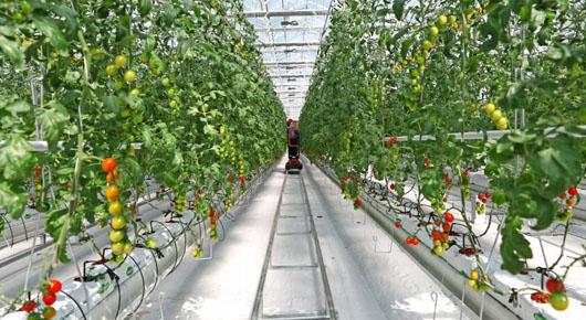 打造可复制可推广的蔬菜产业新模式