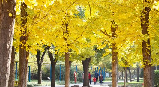 """65处公园游园 形成""""500米半径""""绿化格局"""