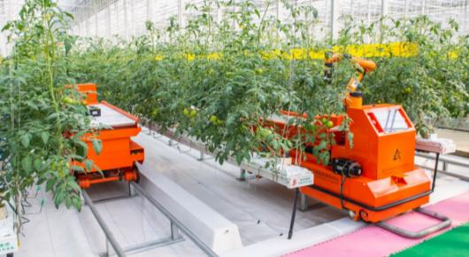 现代农业高新技术试验示范基地打造现代农业示范样板区
